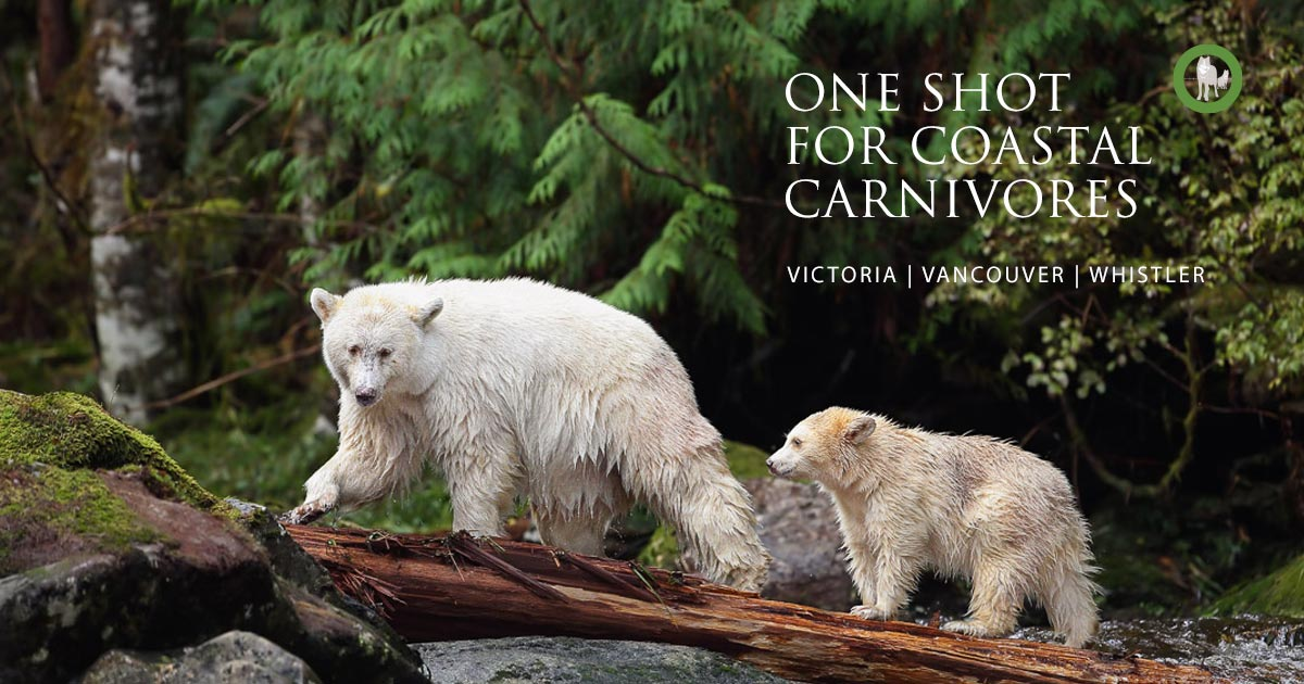 A mother white bear and cub: One Shot For Coastal Carnivores
