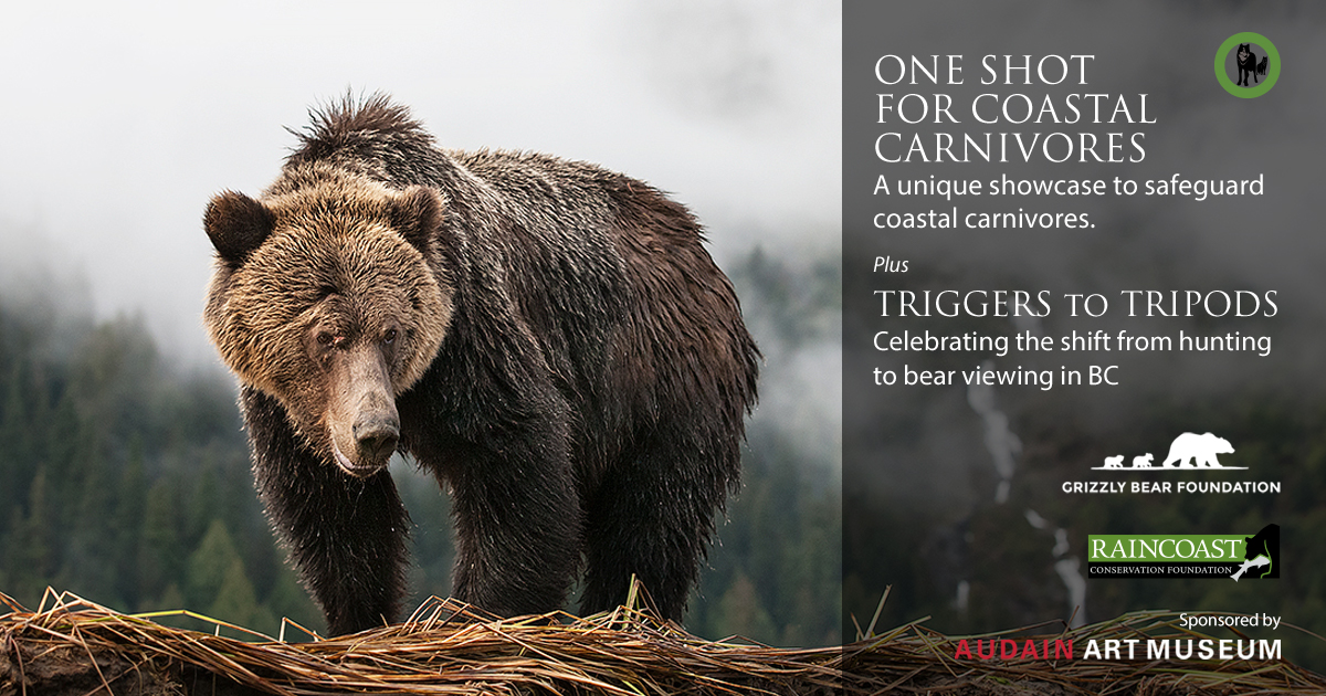 One Shot for Coastal Carnivores, in Whistler at Audain Art Museum.