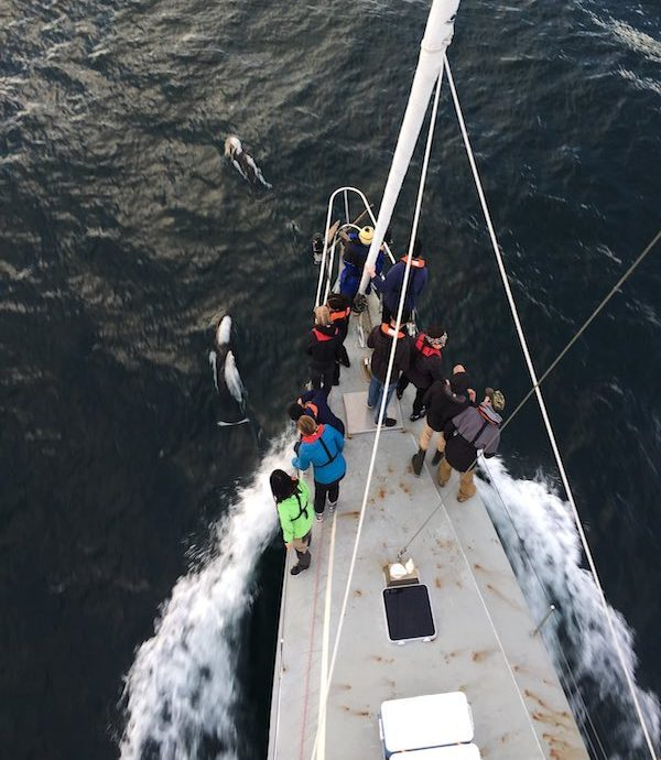 People standing on the bow of the Achiever watching porpoises.