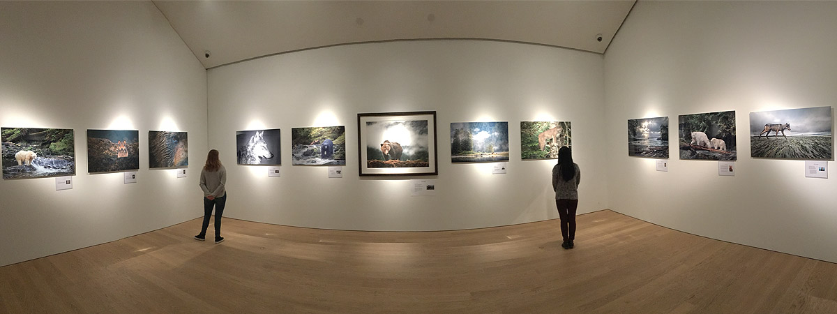 Visitors inspect the giant photos at the Audain Art Gallery, in support of the Coastal Carnivores campaign.