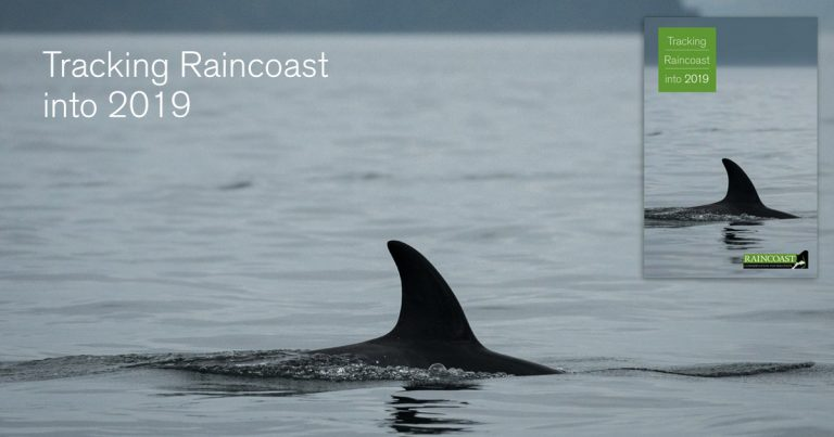 Tracking Raincoast into 2019: J50 swims slowly in the Salish Sea.