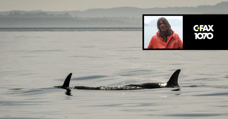 Misty MacDuffee joins Adam Stirling on CFAX 1070 to discuss Washington State's billion dollar plan to aid killer whale recovery