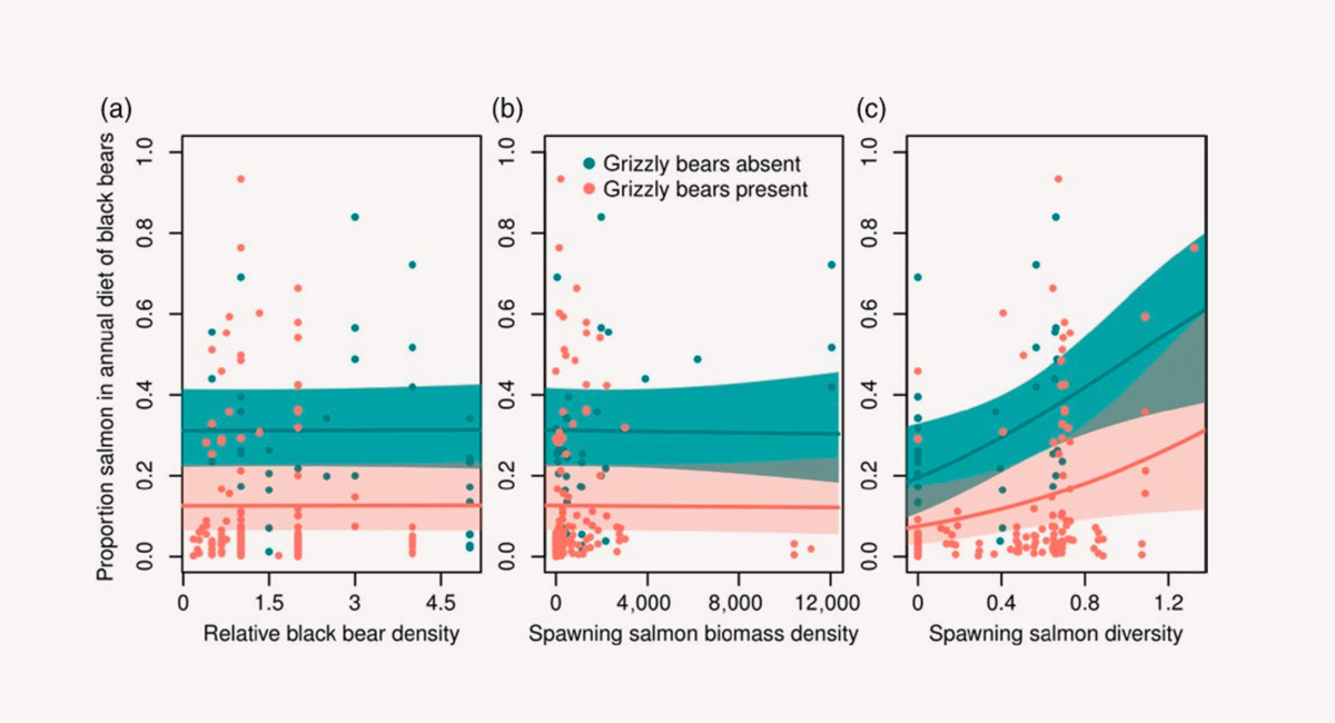 FIGURE 2 Annual proportion of salmon(Oncorhynchusspp.) in diets of male black bears (Ursus americanus) in coastal British Columbia, Canada as a function of (a) relative black bear density, (b) spawning salmon biomass density, and (c) salmon-species diversity (Shannon– Weaver index) in the presence and absence of grizzly bears (U. arctos horribilis).