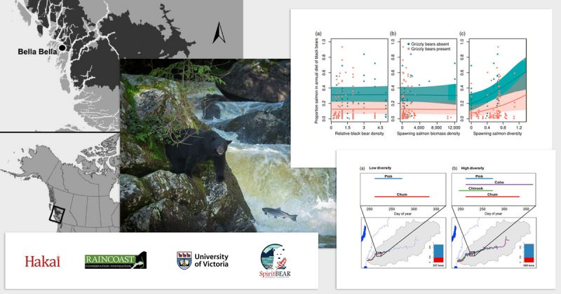 A collage of images and graphs from a published peer reviewed article on salmonid species diversity and bear health: Hakai, Raincoast, University of Victoria, and Spirit Bear Foundation logos at the bottom.