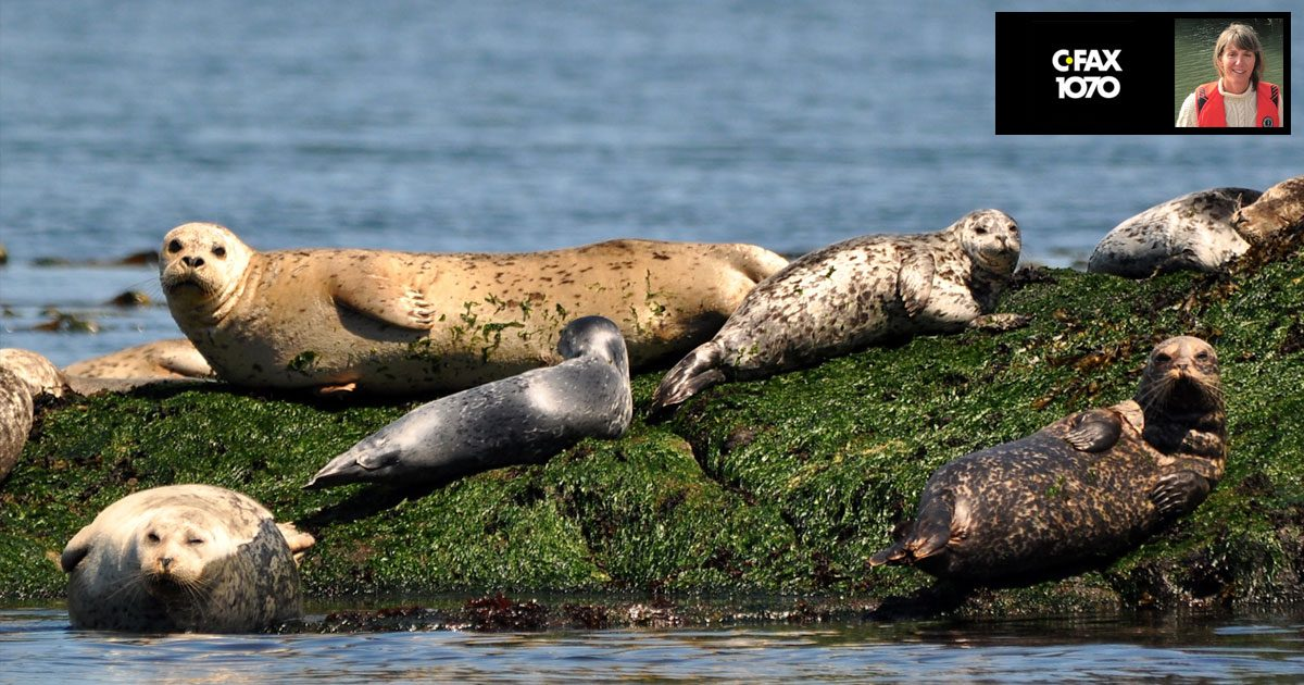Seals hanging out on a rocky outcropping, soaking up some sunshine.