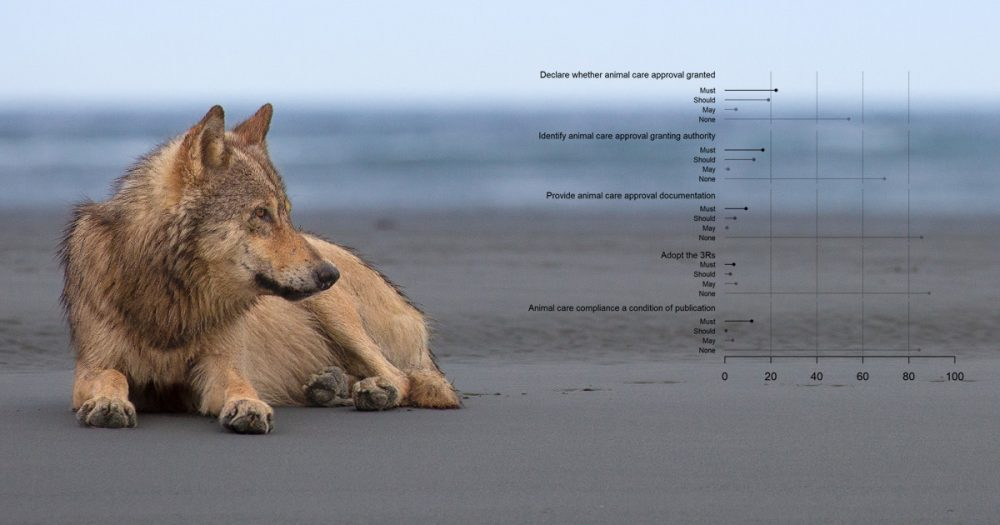 A wolf rests on the beach in the Great Bear Rainforest, with a chart from Figure 1 overlaid.