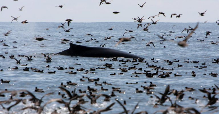 Ecological legacy of coastal B.C. hangs in the balance