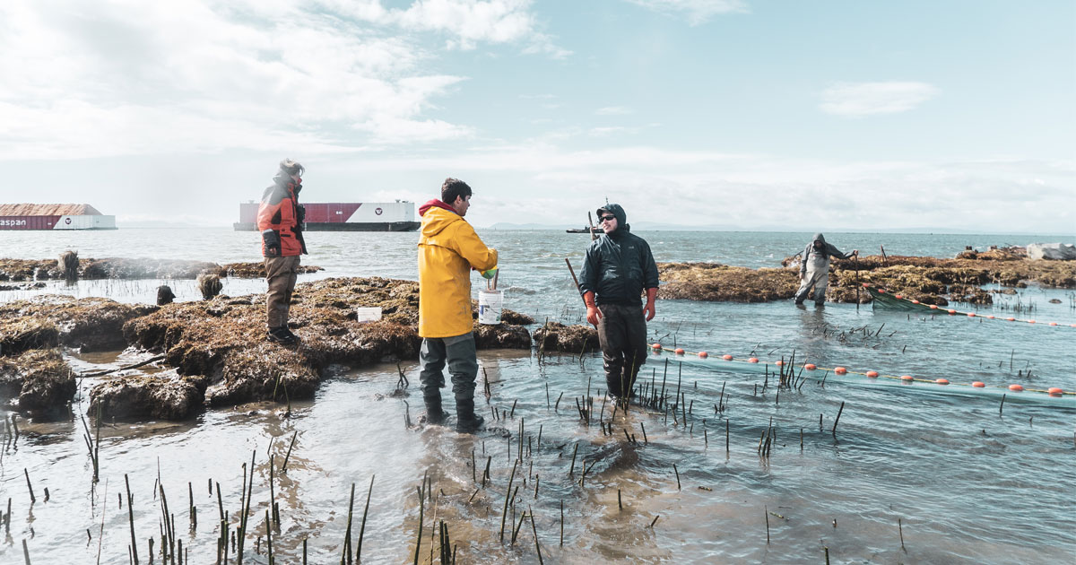 Raincoast Fraser River crew sampling juvenile salmon in the east breach.