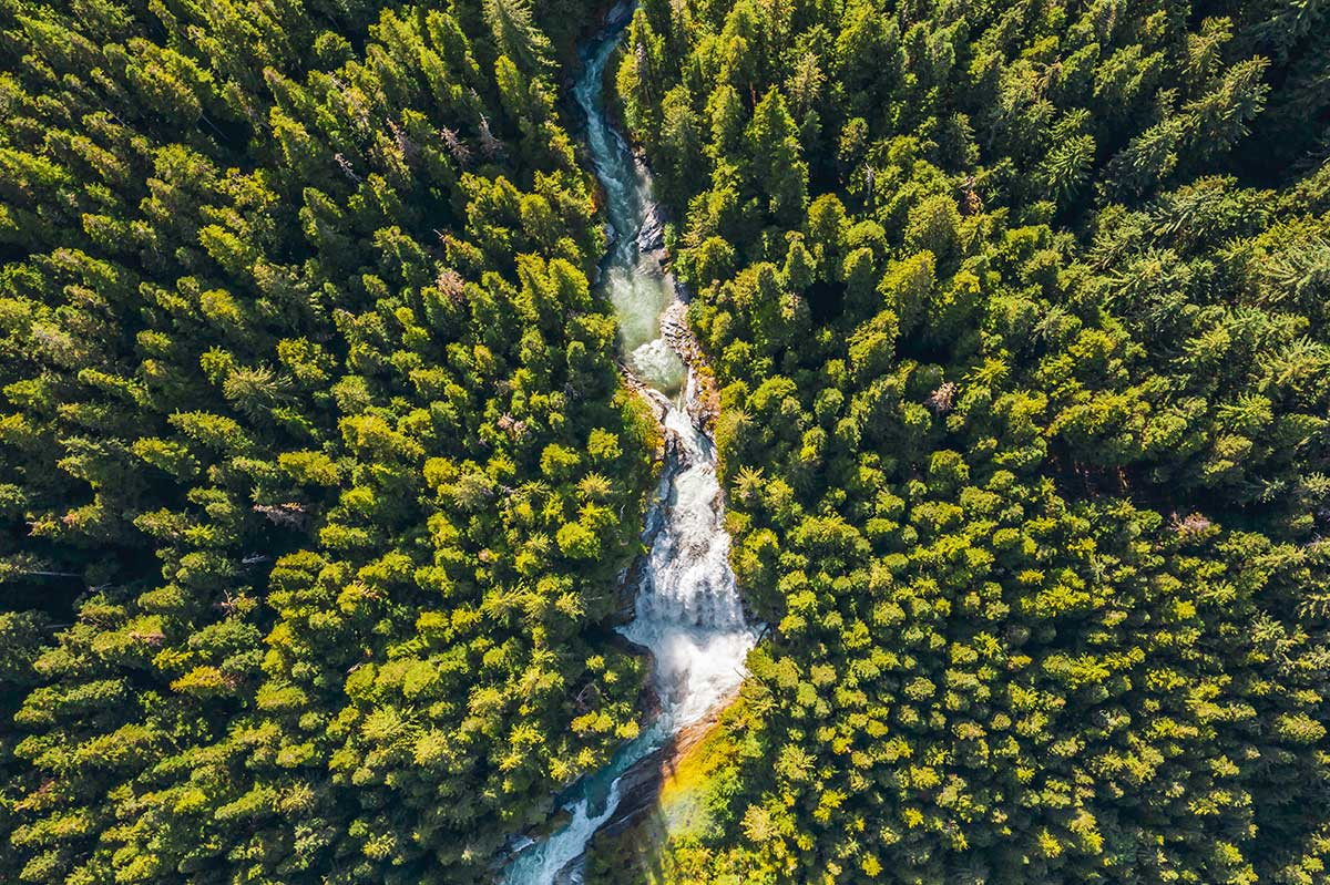 Aerial photo of a forest in the Kitlope.