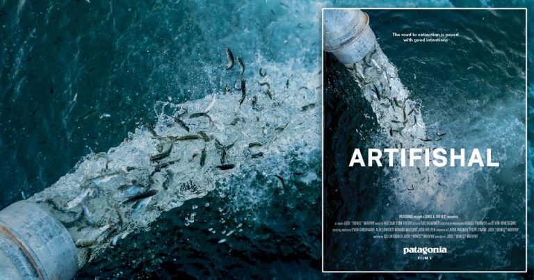 One night only – Patagonia's Artifishal screening at the University of Victoria