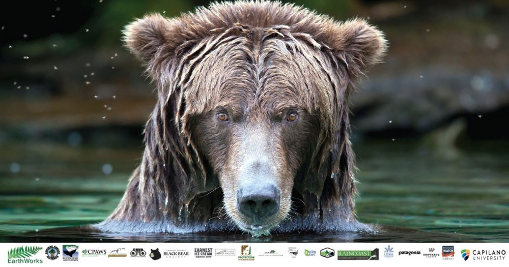 Grizzly bear sits in the water, for BC Bear Day, Vancouver 2019, with sponsor logos at the bottom.