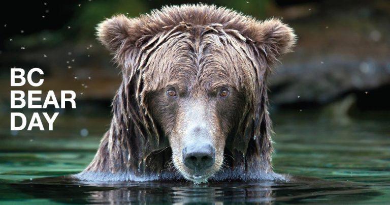 BC Bear Day at Capilano University