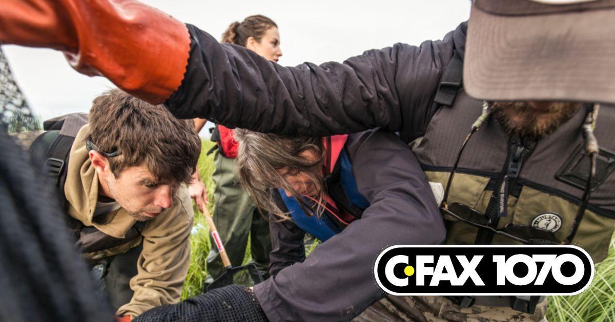Dave Scott, Misty MacDuffee, Lia Chalifour, and Charlie Clark work in the Fraser River Estuary.