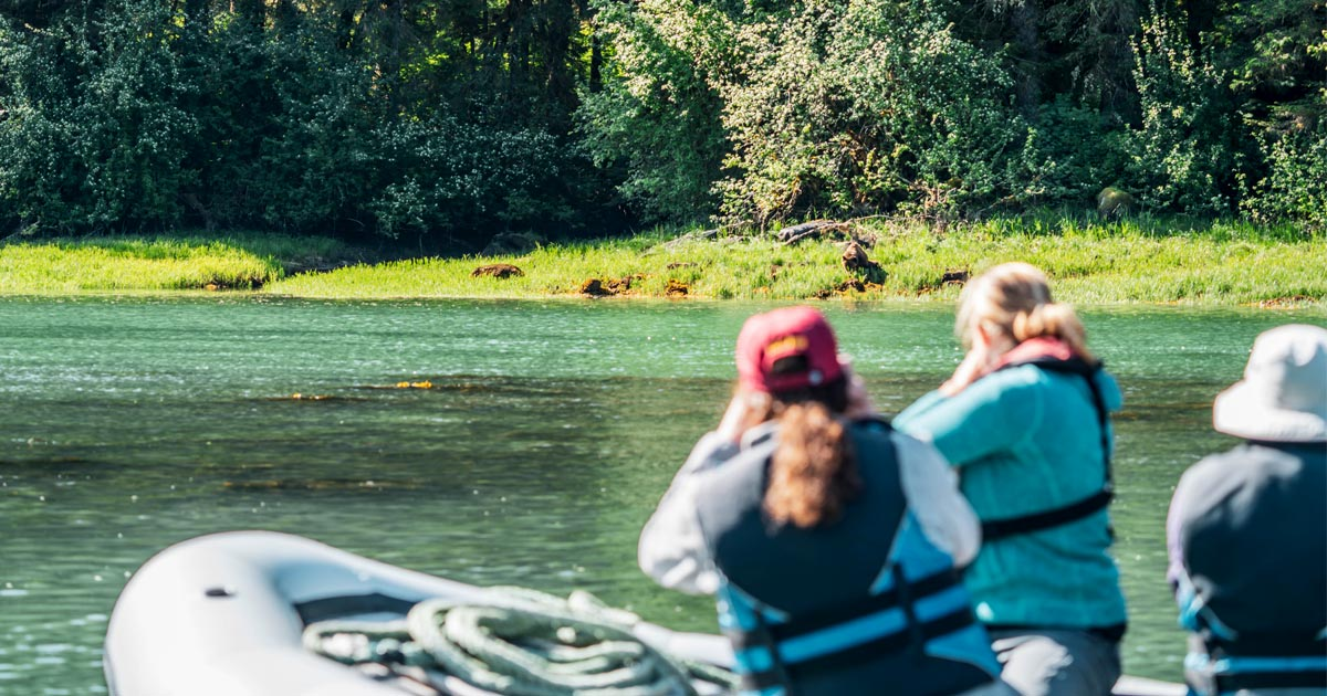 People in a boat a ways from shore, watch a grizzly bear, in the Kitlope.
