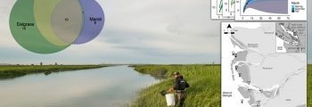 An expansive view of a Raincoast scientist working in the field in the Fraser River estuary.