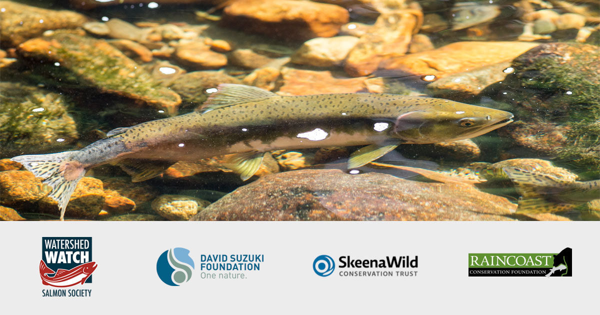 A salmon in a stream, with four partner logos, Watershed Watch, David Suzuki Foundation, SkeenaWild Conservation Trust, and Raincoast.