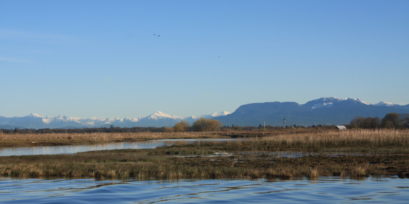 New study confirms and elevates critical importance of Fraser estuary to juvenile Chinook salmon