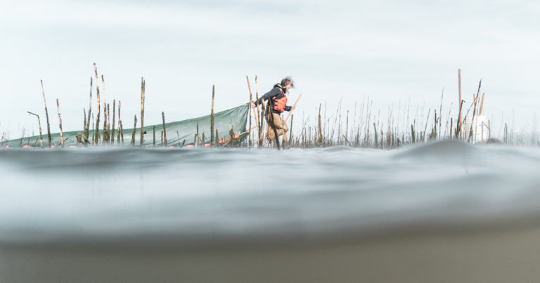 Misty MacDuffee pulls a net in the Fraser River estuary.