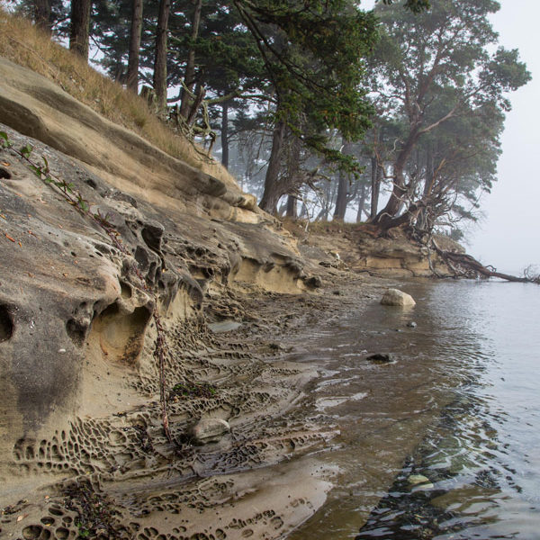 Gulf islands shore line, with trees, water and sandstone.