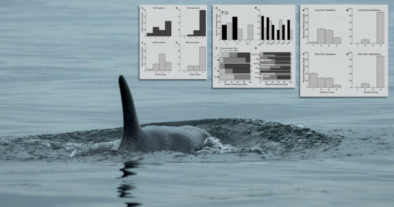 Southern Resident kill whale, J50, swims off, with the research figures in the top right.