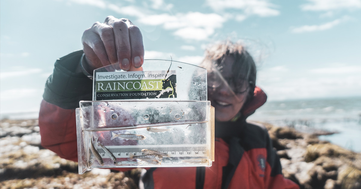 Misty MacDuffee holds up some small salmon from the testing phase of the Fraser River connectivity project.