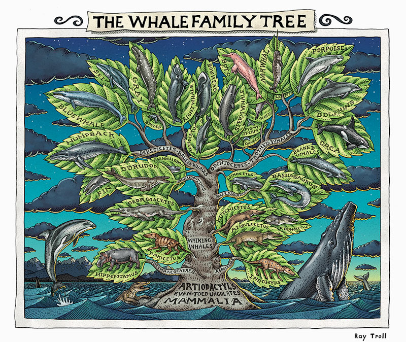 The Whale Family Tree by Ray Troll.