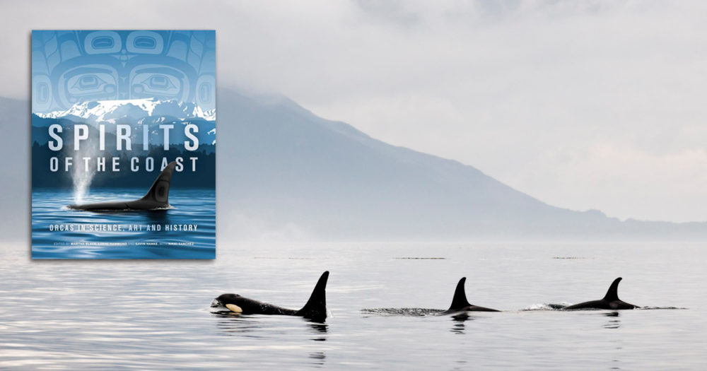 Killer whales glide by in water, with a mountain and fog looming in the background, and a cover of the book, Spirits of the Coast, in the foreground.