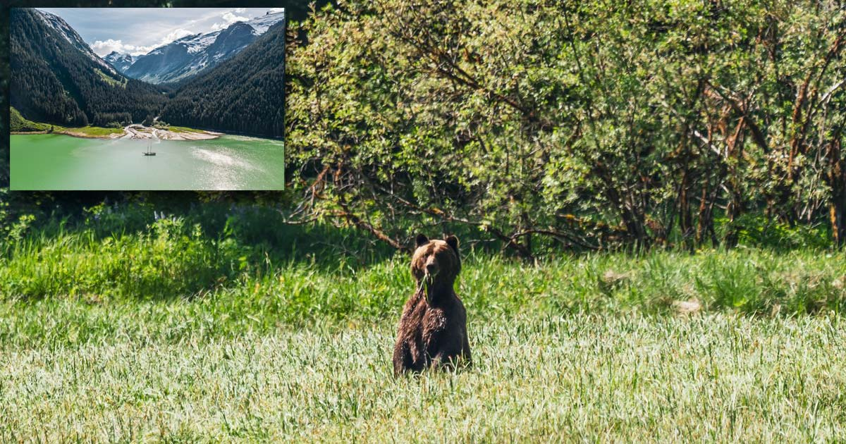 A bear stands on their hind legs with some grass hanging out of their mouth, and a landscape photo of the Kitlope floats in the corner.