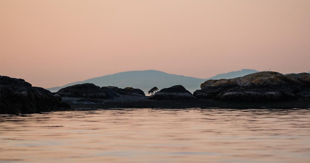Takaya walks along the rocks in the low pink light of dusk.