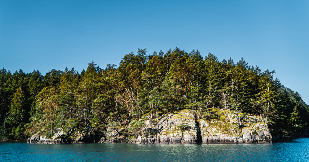 Gulf Islands Forest project