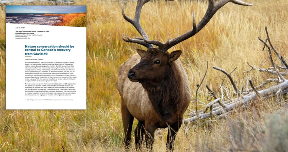 Cover of the open letter to the PMO standing beside a large elk.