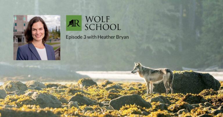 Wolf School Episode 3 with biologist Dr. Heather Bryan