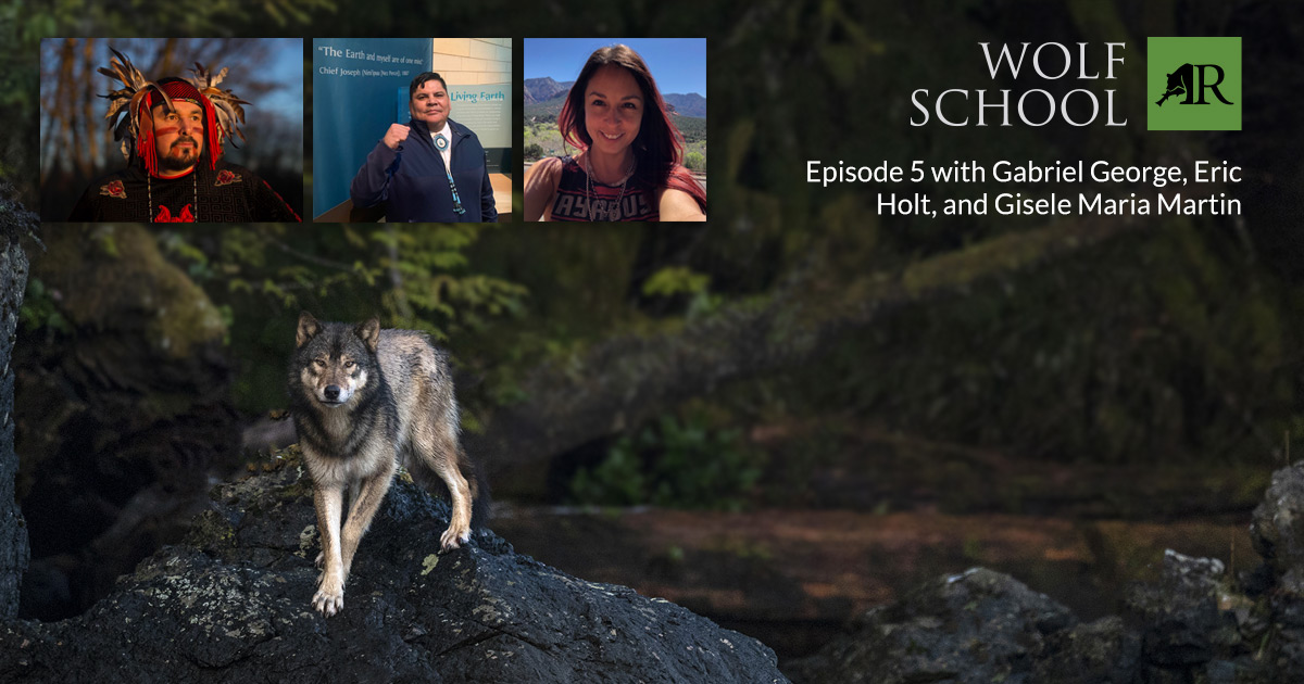 Wolf on a rock with guest photos above.