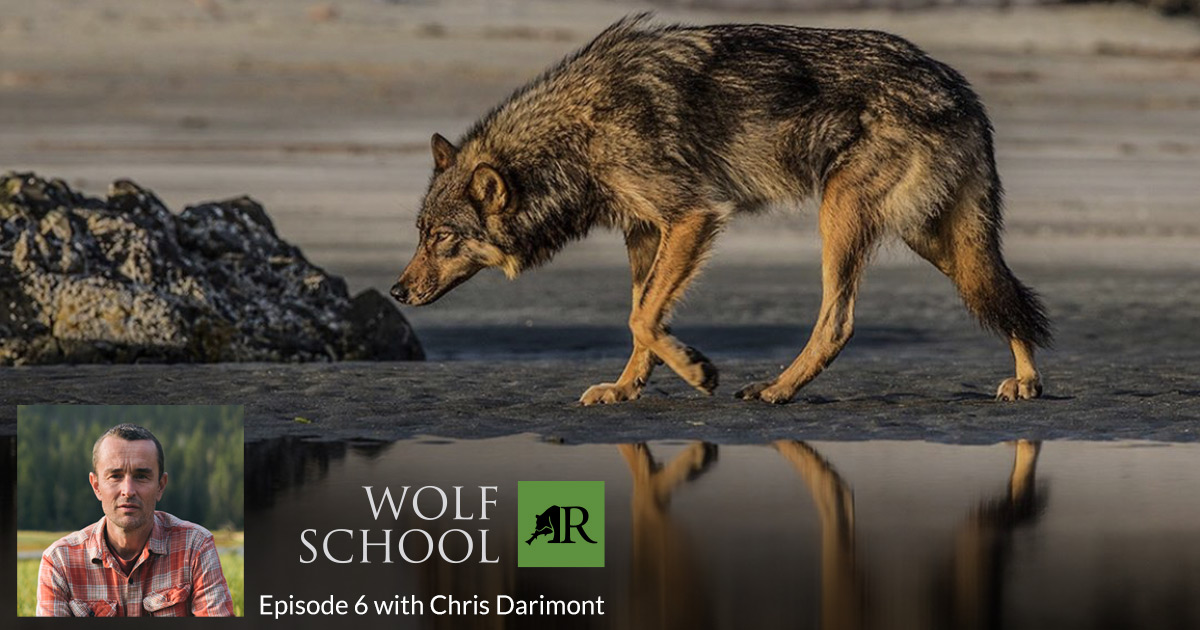Wolf School with Chris Darimont.