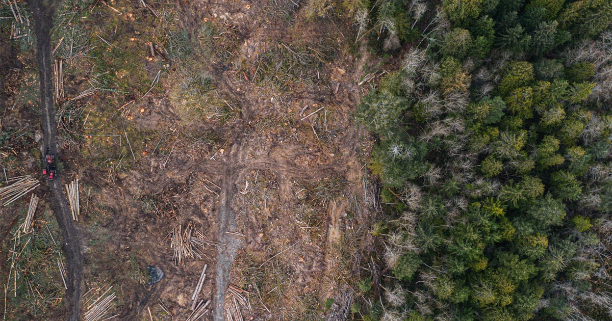 An aerial view of the clear cutting on the Gulf Islands.