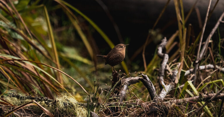 Announcing Raincoast's newest conservation initiative