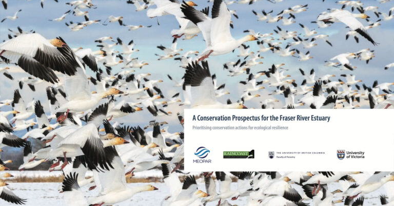 The cover of report, A Conservation Prospectus for the Fraser River Estuary, is laid over an underwater image of tiny salmon