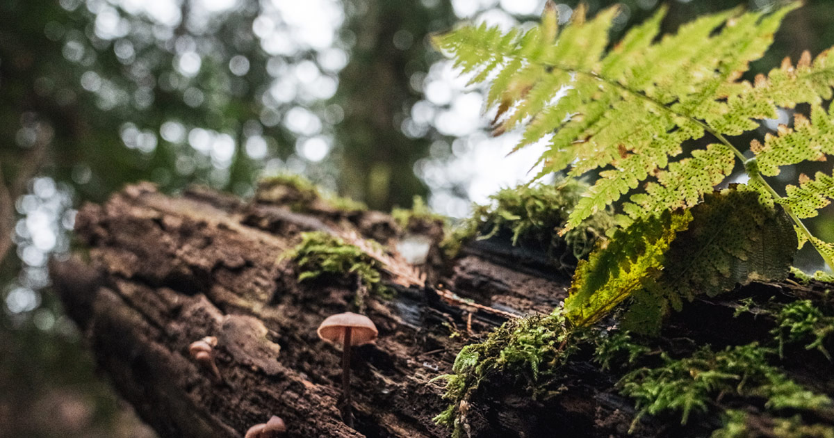 A close up of a mushroom and fern on S,DÁYES Flycatcher Forest.