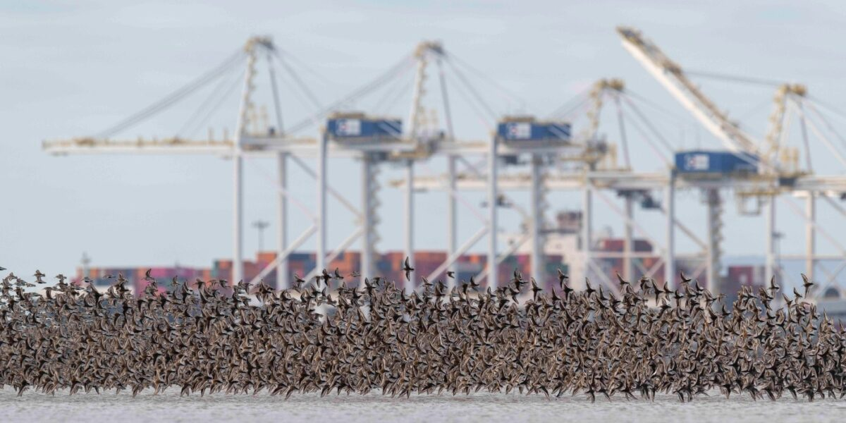 A flock of birds take flight above the water with a port visible in the background.