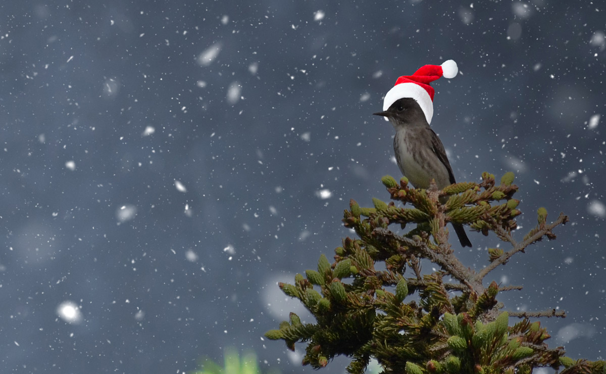 A Flycatcher sits on top of a tree surrounded by snow, wearing a Santa hat.