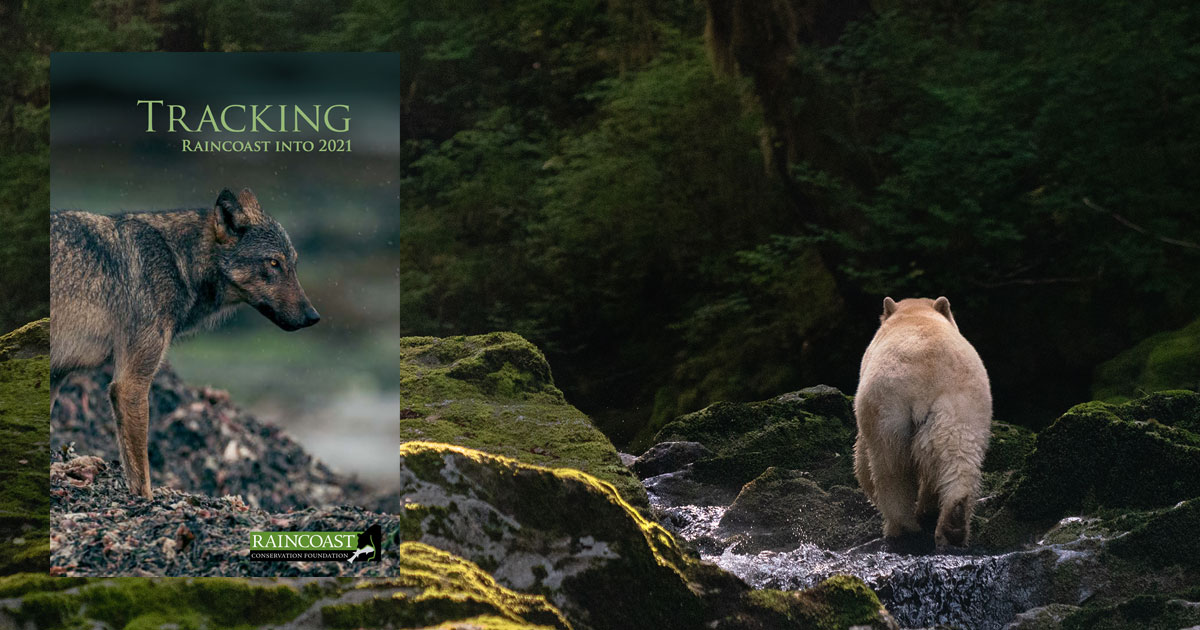 The cover of Tracking Raincoast into 2021 over top of a photo of a spirit bear with a salmon in their mouth.