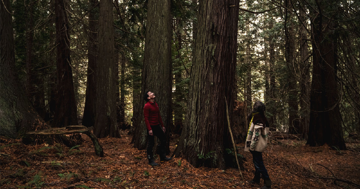 Misty MacDuffee and Chris Genovali looking up at a very large cedar tree in a cedar grove.