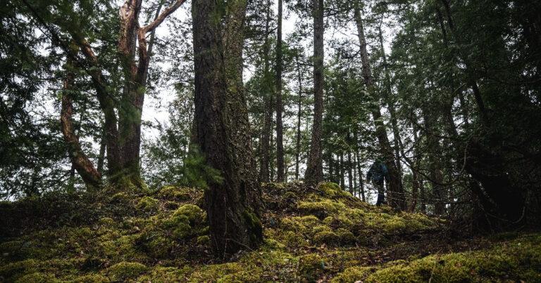 Volunteering with the Big Tree Registry