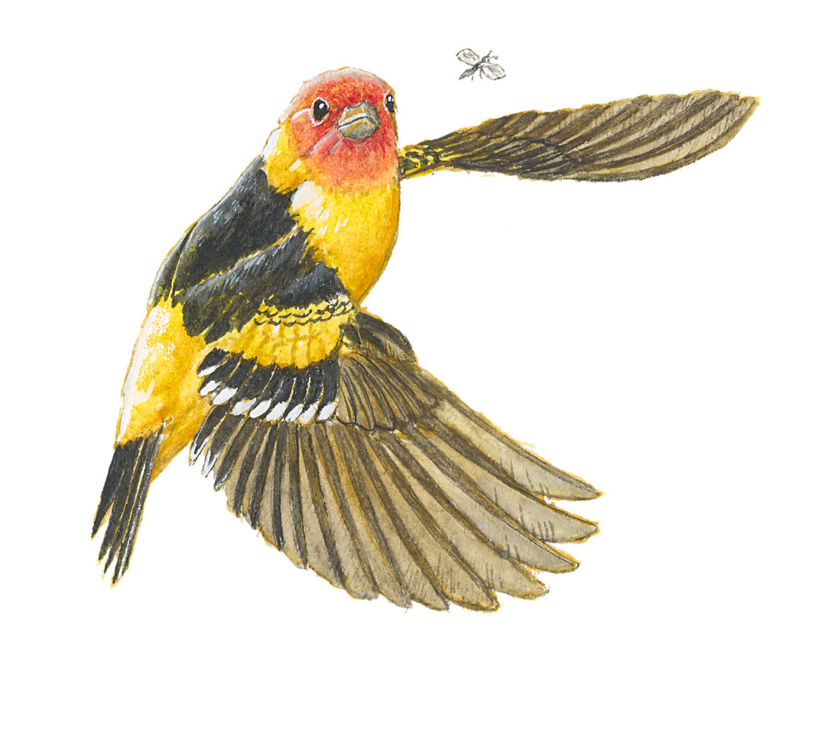 Painting: a bird turns mid flap to look at an insect.