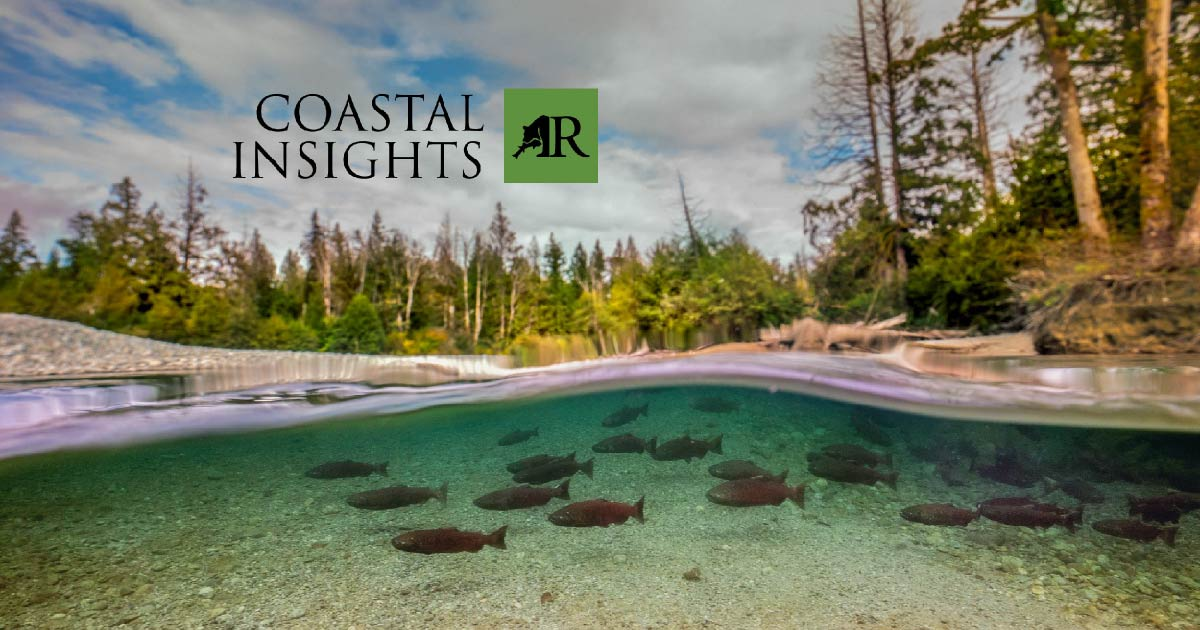 A school of red salmon are visible underwater with a beach and forest in the background.