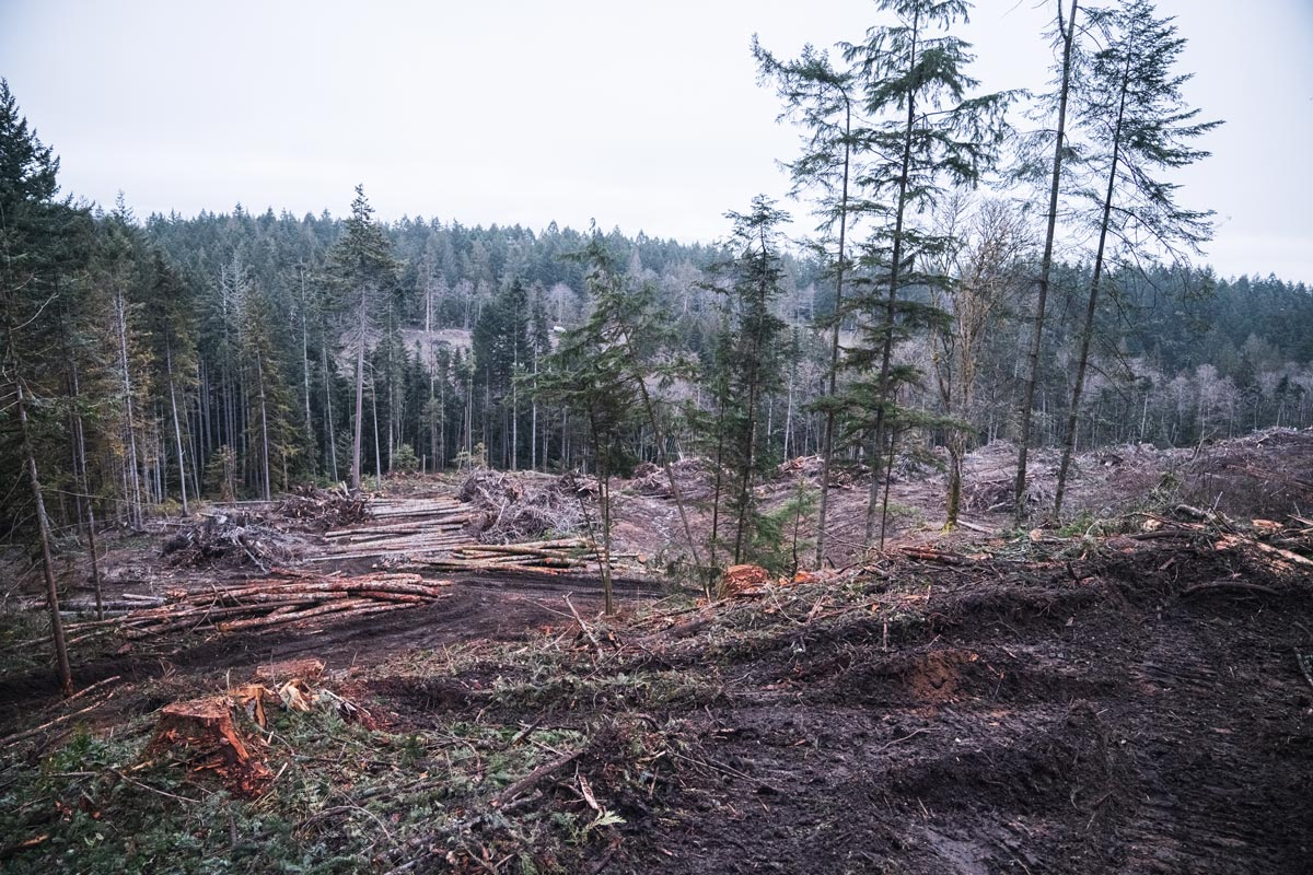 A cutblock on Salt Spring Island with piles and piles of dead trees.