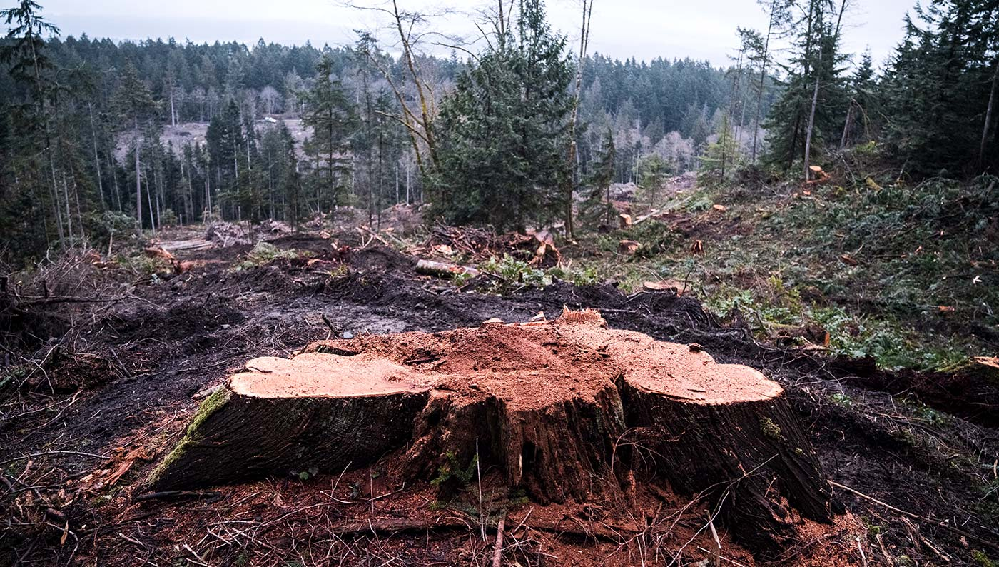 No comprehensive strategy to protect ancient forests in BC
