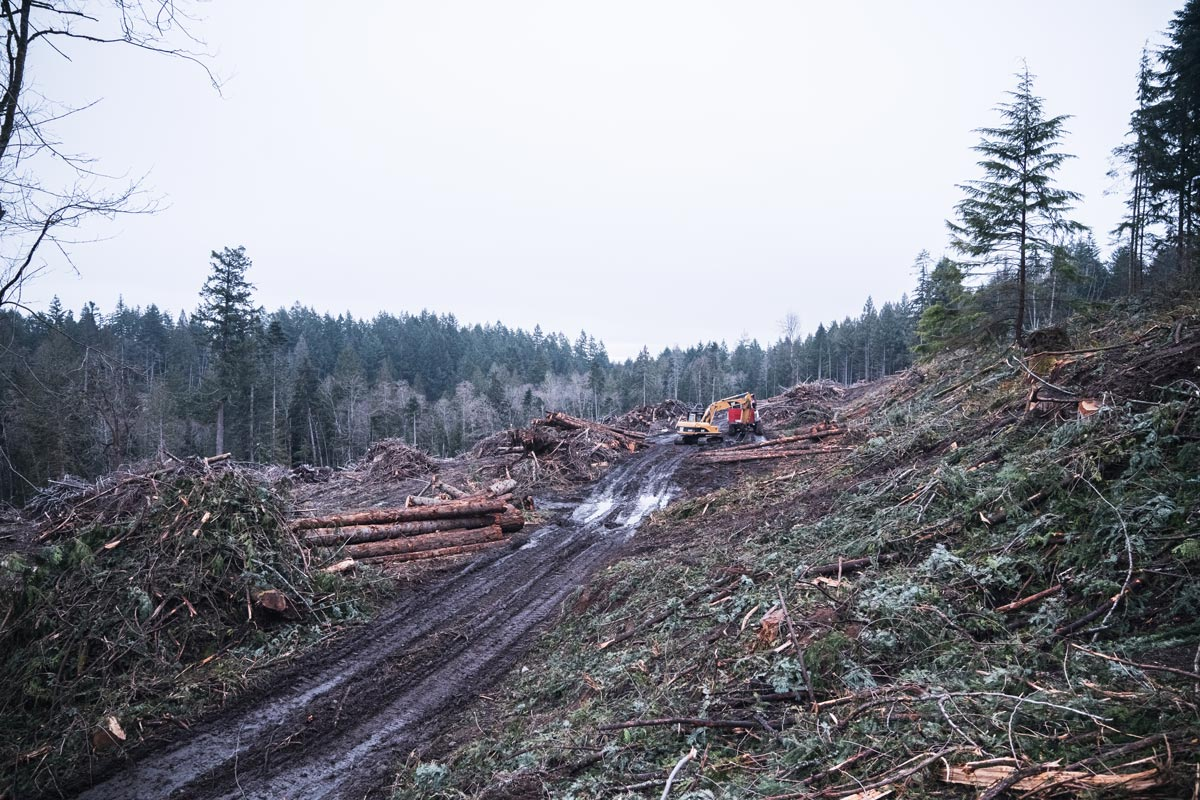 A large cutblock from Salt Spring with an backhoe standing in the middle.