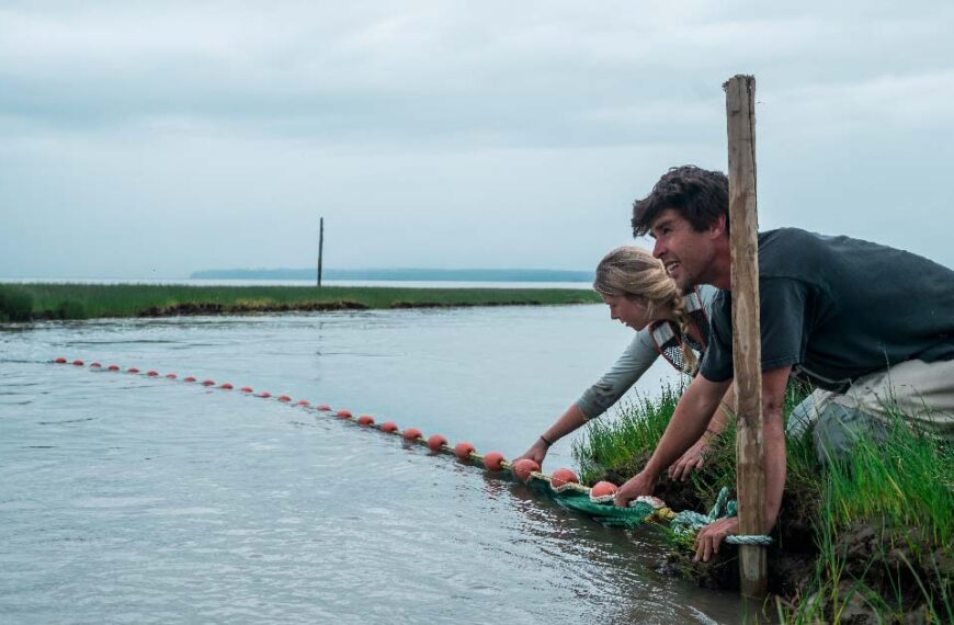 Two people holding a net while doing fish research on a cloudy day