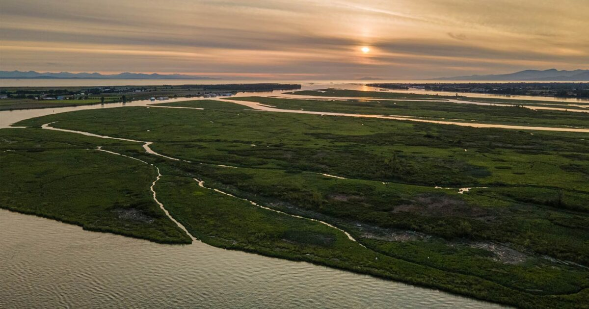 Drone image of the floodplain in the Fraser River Estuary at sunset.